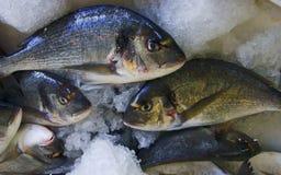 Pesci in fishmonger, Zacinto Immagine Stock