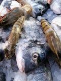 Pesci freschi Immagini Stock