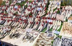 Pesci freschi Immagine Stock Libera da Diritti