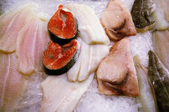 Pesci freschi Fotografia Stock