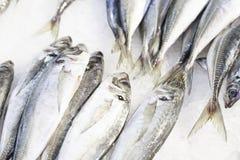 Pesci freschi ad un servizio Immagini Stock Libere da Diritti