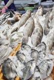 Pesci freschi ad un servizio Fotografia Stock Libera da Diritti