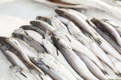Pesci freschi ad un servizio Immagine Stock Libera da Diritti