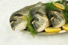 Pesci freschi dal Mar Egeo Immagine Stock Libera da Diritti