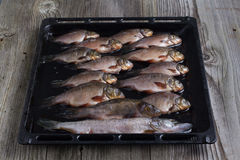 Pesci freschi del fiume Immagini Stock Libere da Diritti