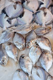 Pesci freschi del ghiaccio Immagini Stock