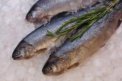 Pesci freschi della trota su ghiaccio Immagini Stock