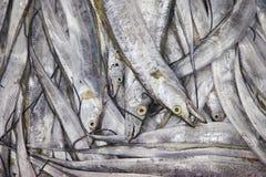 Pesci freschi nel servizio Fotografia Stock