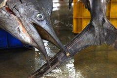 Pesci freschi nel servizio Fotografia Stock Libera da Diritti