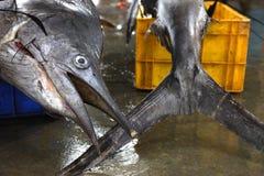 Pesci freschi nel servizio Fotografie Stock Libere da Diritti