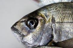 Pesci freschi nell'ambito degli indicatori luminosi dello studio Immagine Stock Libera da Diritti