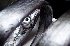 Pesci freschi rotolati in su Fotografia Stock Libera da Diritti
