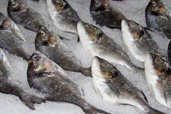 Pesci freschi su ghiaccio Fotografie Stock Libere da Diritti