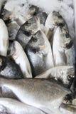 Pesci freschi su ghiaccio Fotografia Stock Libera da Diritti