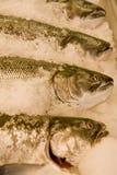 Pesci freschi su ghiaccio al servizio Fotografia Stock