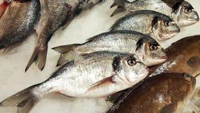 Pesci freschi su ghiaccio da vendere immagine stock