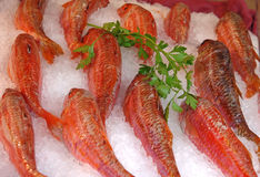 Pesci freschi su ghiaccio da vendere Immagini Stock