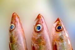 Pesci freschi su ghiaccio decorato per la vendita al servizio Immagine Stock Libera da Diritti