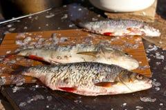 Pesci freschi su un viaggio di pesca Fotografia Stock