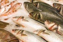 Pesci freschi sul ghiaccio immagine stock libera da diritti