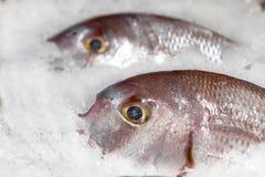 Pesci freschi sul primo piano del ghiaccio Fotografie Stock Libere da Diritti