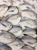 Pesci ghiacciati Immagini Stock Libere da Diritti