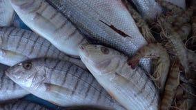 Pesci in ghiaccio del deposito del pesce video d archivio