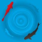 Pesci giapponesi della carpa o di koi Immagini Stock Libere da Diritti