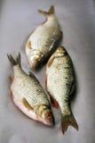 Pesci grezzi Fotografia Stock Libera da Diritti