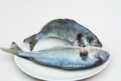 Pesci grezzi Immagini Stock