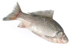 Pesci grezzi Immagine Stock