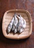 Pesci grezzi di shishamo Fotografia Stock Libera da Diritti