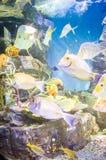 Pesci in Hanwah Aqua Planet Jeju, Seopjikoji vicino individuato e fotografie stock
