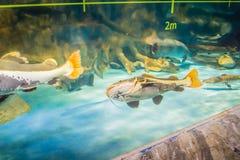 Pesci in Hanwah Aqua Planet Jeju, Seopjikoji vicino individuato e fotografia stock