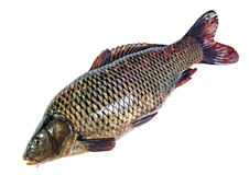 Pesci isolati Fotografia Stock Libera da Diritti