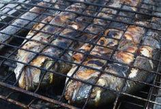 Pesci mediterranei Immagine Stock