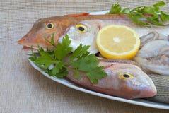 Pesci mediterranei Immagini Stock Libere da Diritti