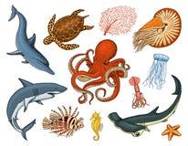 Pesci messi o nautilus pompilius della creatura del mare, meduse e stelle marine polipo e calamaro, calamari delfino e illustrazione vettoriale