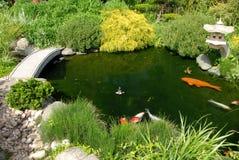 Pesci nel garedn giapponese Immagini Stock