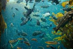 Pesci nell'acquario immagini stock libere da diritti