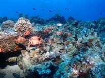 Pesci neri foto stock 1 800 pesci neri immagini stock e for Disegni della barra del garage