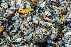 Pesci pescati Immagine Stock Libera da Diritti