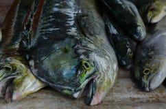 Pesci pescati freschi fotografia stock