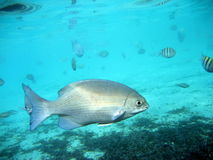 Sui pesci vicini Fotografia Stock