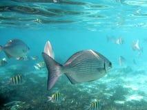 Sui pesci vicini Fotografia Stock Libera da Diritti