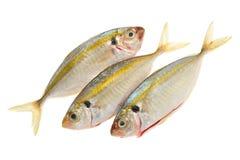 Pesci pronti per cucinare Fotografie Stock