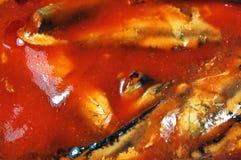 Pesci in salsa di pomodori Fotografie Stock