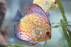 Pesci scuri in acquario immagine stock libera da diritti