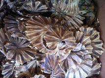 Pesci seccati al sole Fotografia Stock Libera da Diritti