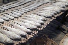 Pesci seccati al sole Fotografie Stock